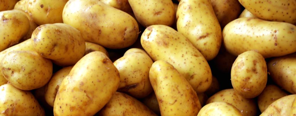 biologische frieten